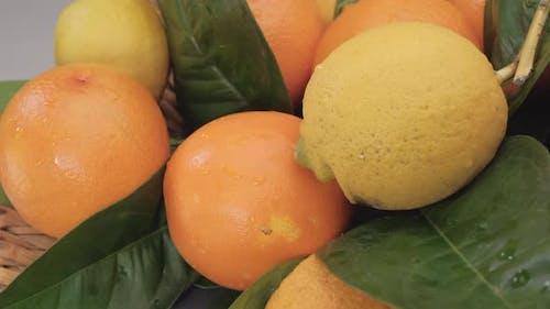 Zitrusfrucht Vitamin Gesundes Essen