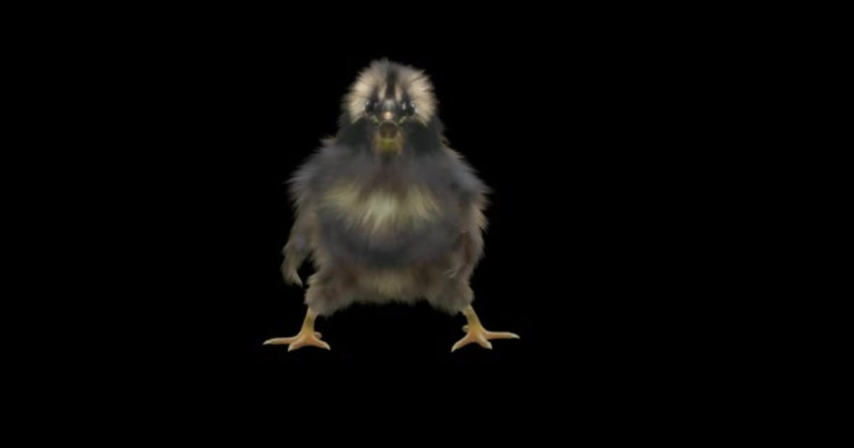 21 Baby Chicks Dancing HD