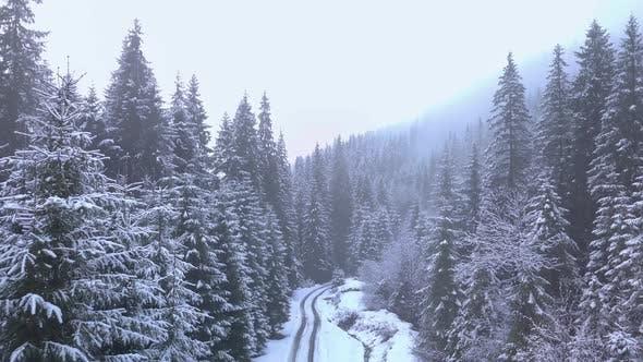 Thumbnail for Flug über den Winterwald