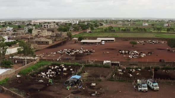 Thumbnail for Africa Mali Village And Ox Aerial View 4