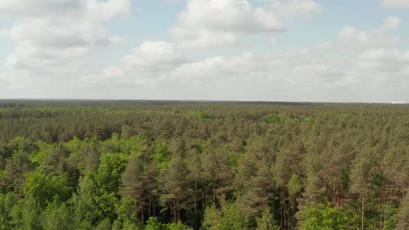 Thumbnail for AERIAL: Slow Flight Forward Towards Rich Green Forest Tree Tops Over Germany European Woods with