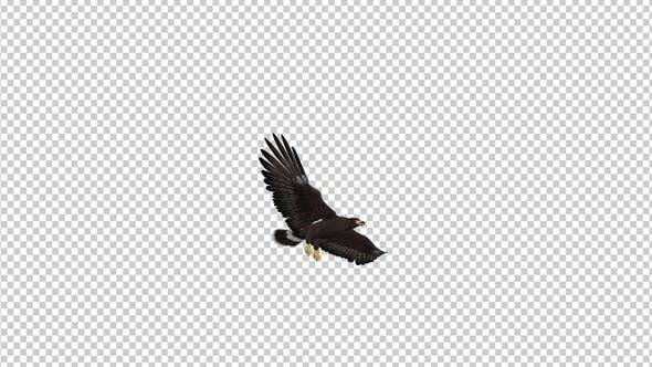 Black Hawk - Flying Transition - II