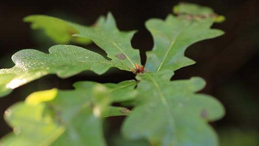 Thumbnail for Leaves 11