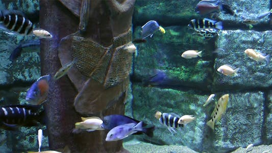 Thumbnail for Aquarium 2
