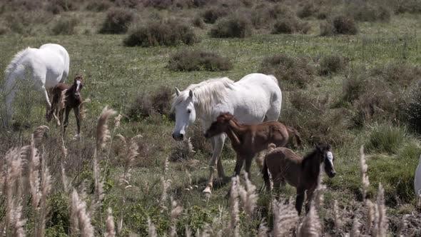 Thumbnail for Horses nature wilflife reserve carmargue lagoon