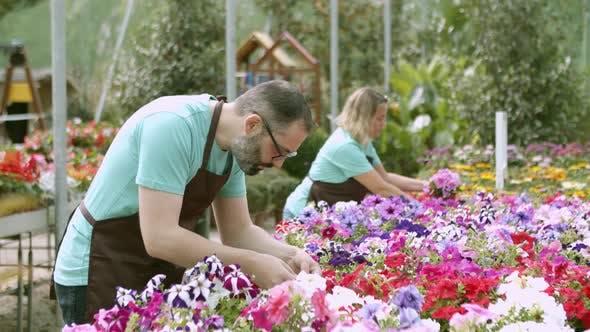 Gardeners or Botanical Experts Wearing Aprons