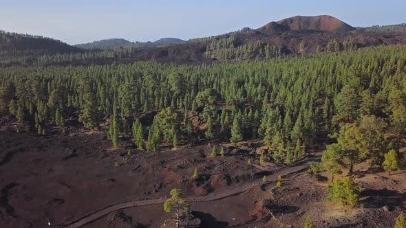 Thumbnail for Aerial View of Pine Forest in Teide Caldera, Tenerife