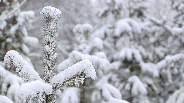Thumbnail for Falling Snow
