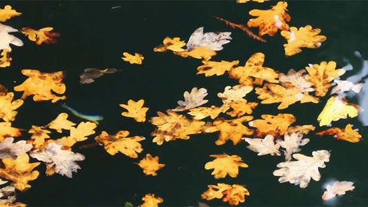 Thumbnail for Leaves on the Water 3