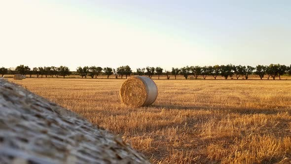 Field with hay bales after harvest on sunset
