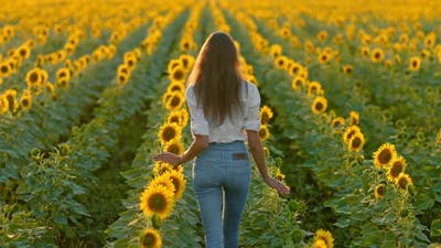 Woman with Long Hair Walks in a Field with Sunflowers