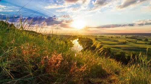 Beautiful Sunny Sunset or Sunrise Countryside Landscape. Clouds of Small Insects Flying Over Green