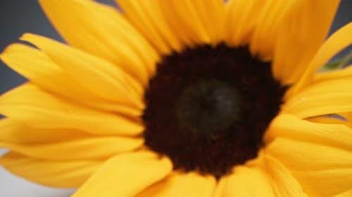 Zoomed Sunflower Seeds