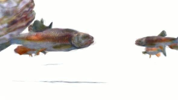 Thumbnail for Fish Stop Motion