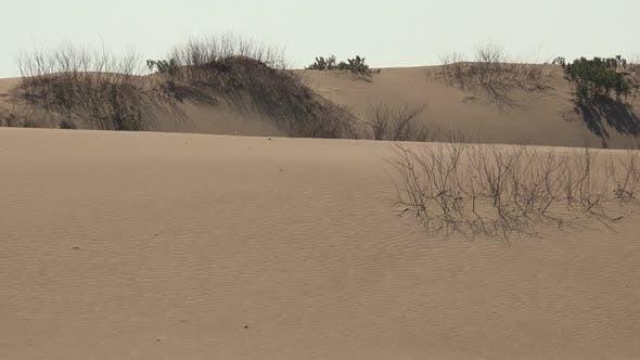 Sand Dunes on Desert