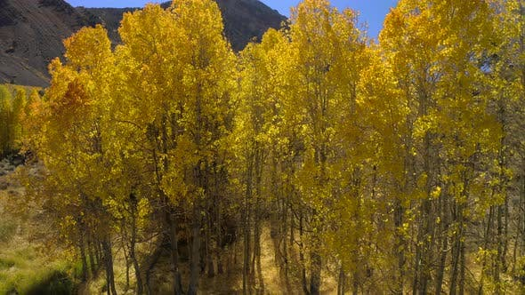Thumbnail for Passing Through the Grove and Overlooking the Mountain Valley Above the Golden Tree Tops.