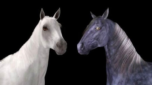 Real Horse - White & Black - Pack of 2