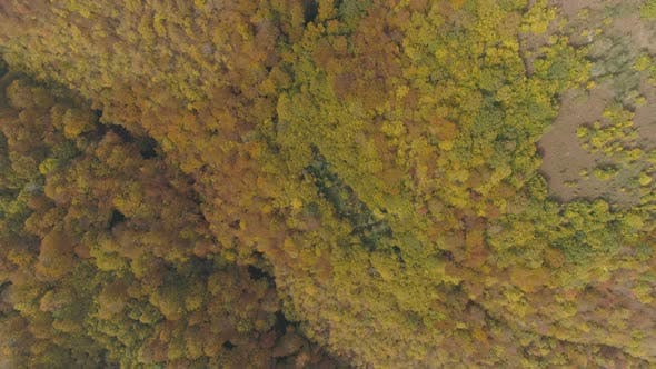 Thumbnail for Woods of The Balkan Peninsula During the Autumn Period