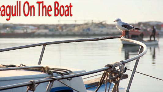 Thumbnail for Seagull On The Boat Video