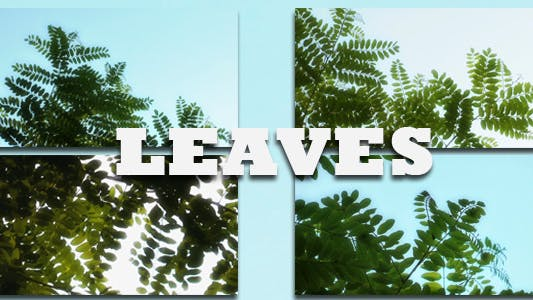 Thumbnail for Leaves