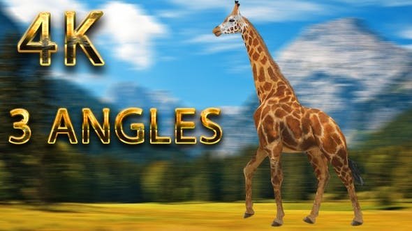 Thumbnail for Giraffe walking from 3 different angles
