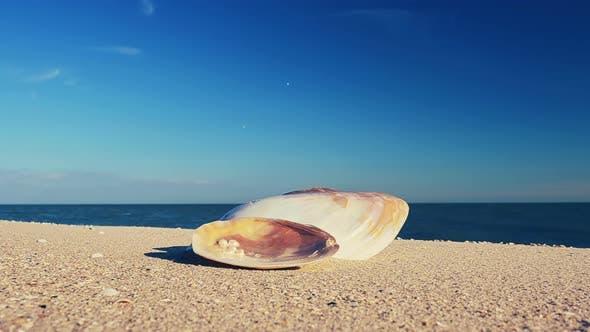 Thumbnail for Beach 3