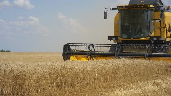 Thumbnail for Combine Harvester Gathers the Wheat Crop