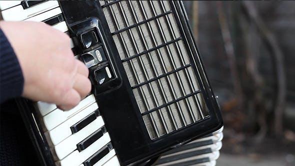 Thumbnail for Piano Accordion Musician