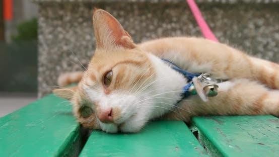 Thumbnail for Street cat sleeping on bench