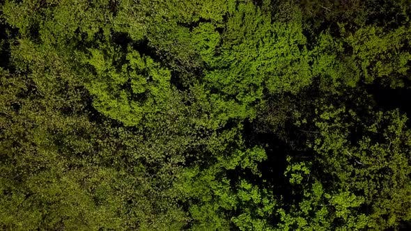 Thumbnail for Top Down View Flying Forward Above Beautiful Green Forest