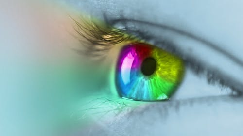 Mehrfarbige Iris