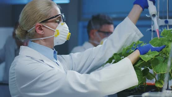Thumbnail for Scientist Experimenting with a Green Plant