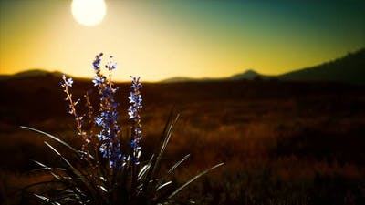 Wild Flowers on Hills at Sunset
