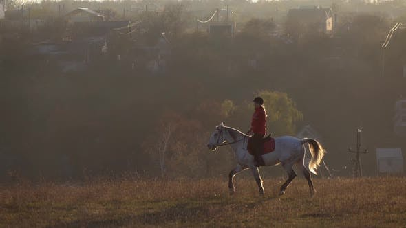 Jockey Riding on Thoroughbred White Stallion