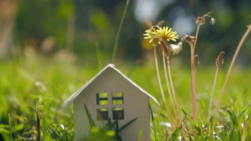 Eco home and living Metaphor with small house in green grass