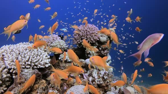 Cover Image for Underwater Tropical Colorful Fish
