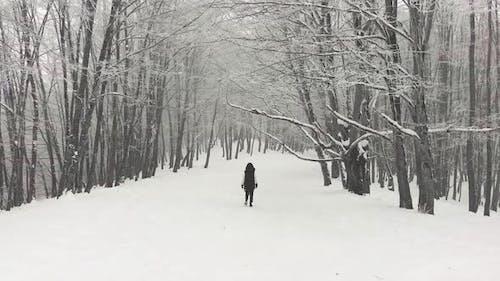Solo Walking In Winter Forest Solo Wonderland