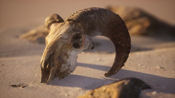 Thumbnail for Skull with Ram Horns on the Beach
