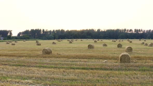 Thumbnail for Field Stack Of Hay