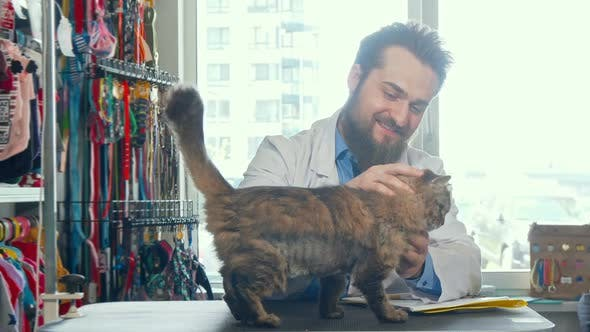 Thumbnail for Cheerful Male Vet Doctor Petting Cute Cat at His Clinic