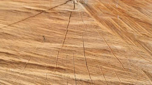 Slow tilt on detailed tree log cross section with annual rings and cracks close-up 4K 2160p 30fps Ul