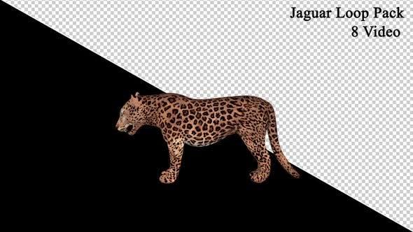 Jaguar Loop Pack