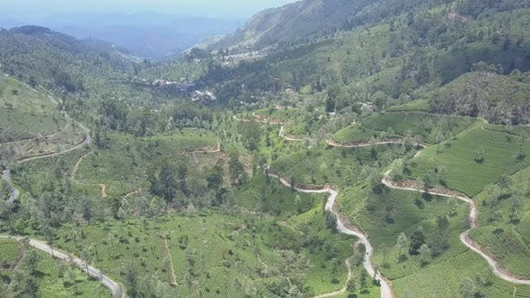 Tea Plantations and Empty Rural Roads in Picturesque Valley