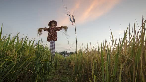 Scarecrows standing at green rice field at Penang, Malaysia.