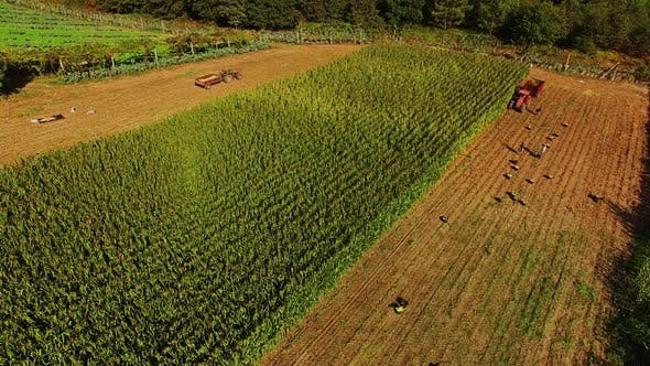 Cover Image for Aerial Shot of a Harvester Working on a Field while Tractor Awaits its Load