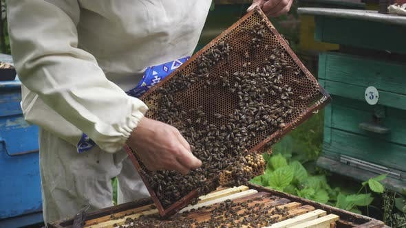 Beekeeper With Bees 6