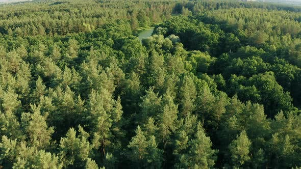 Drone Flight View Above Green Forest And Small Marsh Landscape. Top View From High Attitude In