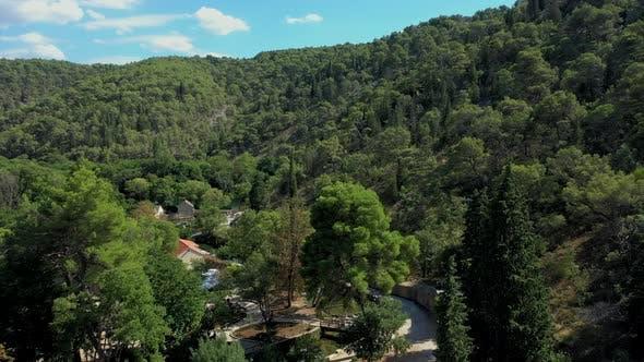 Croatian forest in summer
