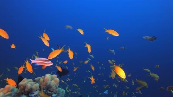 Thumbnail for Underwater Sea Tropical Marine Reef