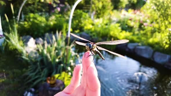 Big Dragonfly Sits on Woman Fingers with Lake and Green Garden on Background